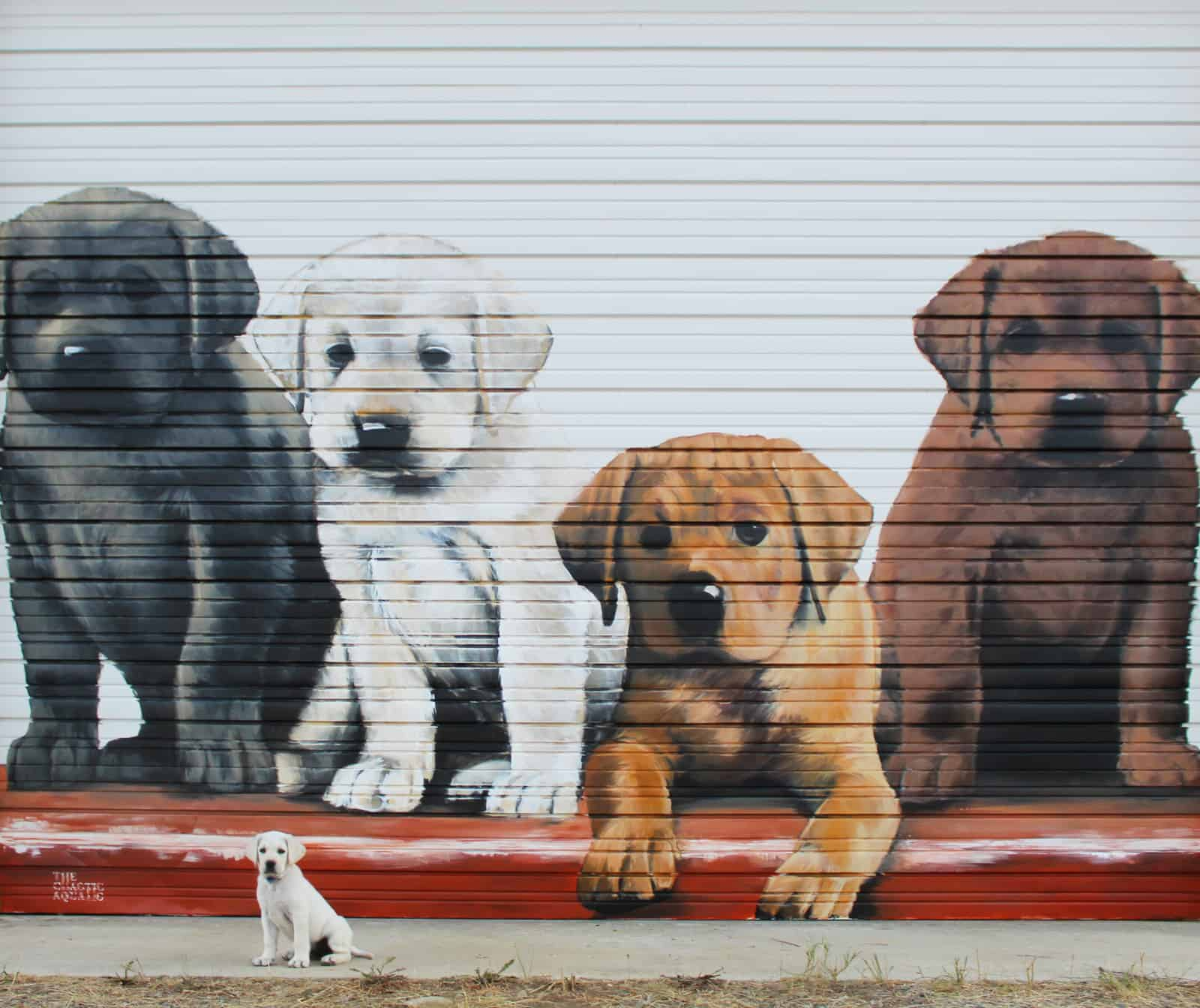 Hand painted mural of four puppies.