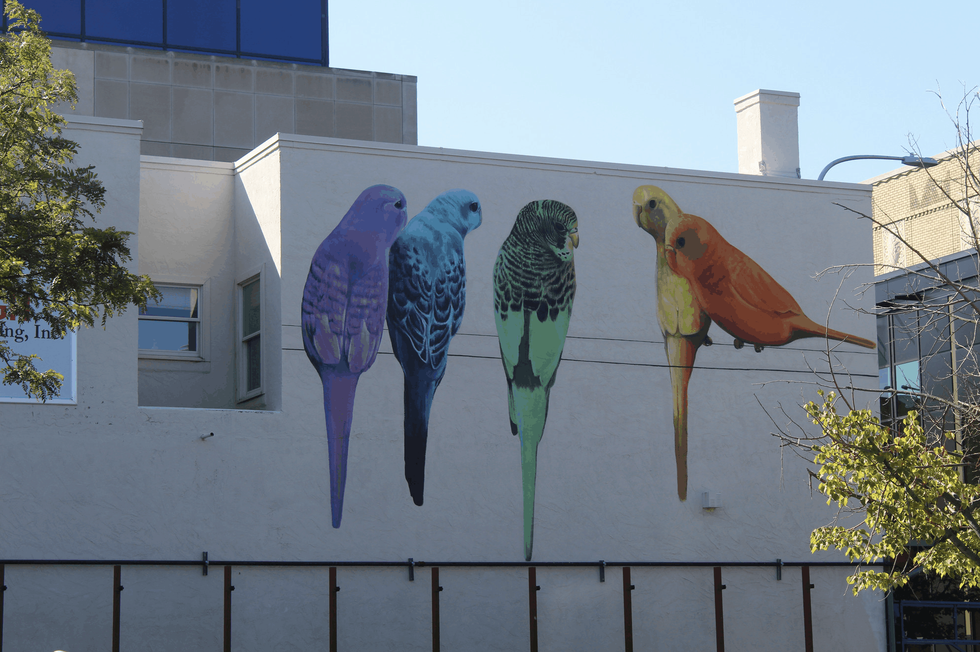 Realistic mural of colorful birds painted on the side of a building in Montana.